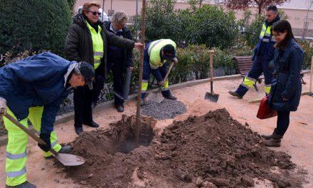 Pilar Zamora visita la regeneración de los jardines de la plaza Fernando Merry del Val llevado a cabo gracias al Programa+55